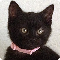 Adopt A Pet :: Bryce - Irvine, CA