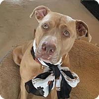 Adopt A Pet :: Chelsea - Manhasset, NY