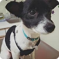 Adopt A Pet :: Lala - Fullerton, CA
