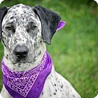 Adopt A Pet :: Spotty Aka Bella - Loxahatchee, FL