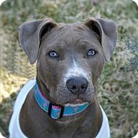 Adopt A Pet :: Emme - Framingham, MA