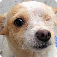 Adopt A Pet :: JODY - ID#A339244 - Petaluma, CA