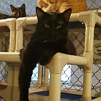 Adopt A Pet :: Tate - Geneseo, IL