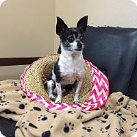 Adopt A Pet :: Sergio - Cumming, GA