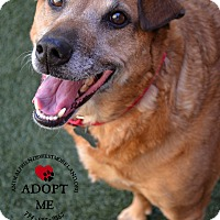 Shepherd (Unknown Type) Mix Dog for adoption in Youngwood, Pennsylvania - Rachel