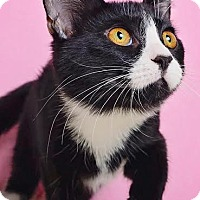 Adopt A Pet :: Jody - Chicago, IL