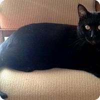 Adopt A Pet :: Ebony - Lebanon, PA