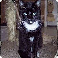 Adopt A Pet :: Clyde - Delmont, PA