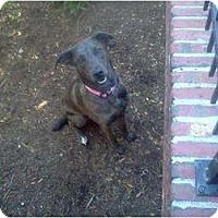 Adopt A Pet :: Stormy - Lexington, TN