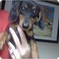 Adopt A Pet :: Bella - Lexington, TN