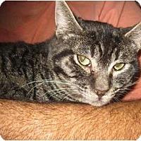 Adopt A Pet :: Rocky - Los Alamitos, CA