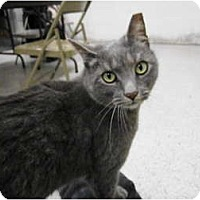 Adopt A Pet :: Marchello - Warminster, PA