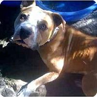Adopt A Pet :: Buster - Fowler, CA