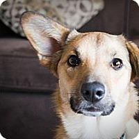 Adopt A Pet :: Ellie - Saskatoon, SK