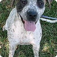 Adopt A Pet :: Brandi - Miami, FL