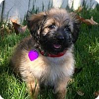 Adopt A Pet :: STONE - Mission Viejo, CA