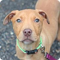 Adopt A Pet :: Carlita - Reisterstown, MD
