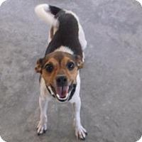 Adopt A Pet :: Ted - Bonifay, FL