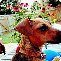 Adopt A Pet :: Nova - Decatur, GA