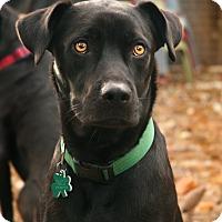 Adopt A Pet :: Ashe - Alpharetta, GA