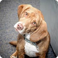 Adopt A Pet :: Tammy - Sparta, NJ