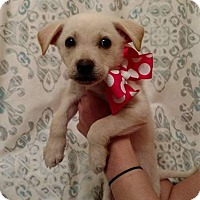 Adopt A Pet :: heather - West Bend, WI