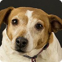 Adopt A Pet :: Roxy - Kirkland, QC
