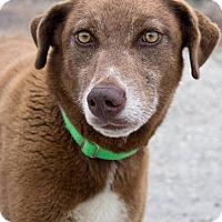 Adopt A Pet :: Raven - Austin, TX