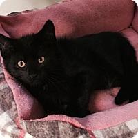 Adopt A Pet :: Jelly Bean - Denver, CO