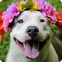 Adopt A Pet :: Xena - Tyrone, PA
