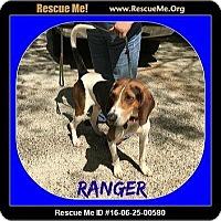 Adopt A Pet :: Ranger - Milton, GA