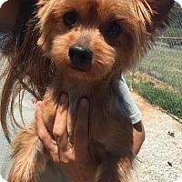 Adopt A Pet :: Tali - Spartanburg, SC