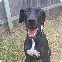 Adopt A Pet :: Duke - Helotes, TX
