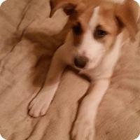 Adopt A Pet :: Dyan - Tucson, AZ