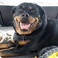 Adopt A Pet :: Oakley - Frederick, PA