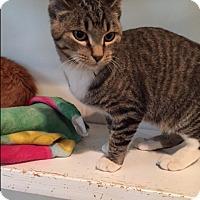 Adopt A Pet :: Harold - Ashland, OH