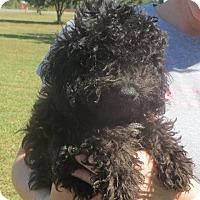 Adopt A Pet :: Sergio - Allentown, PA