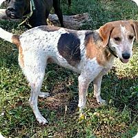Adopt A Pet :: Divita - Lexington, MA