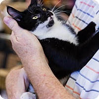Adopt A Pet :: Ronnie - Gilbert, AZ
