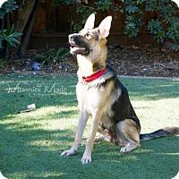Adopt A Pet :: Elena - San Jose, CA