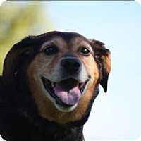 Adopt A Pet :: Tedo - Duluth, MN