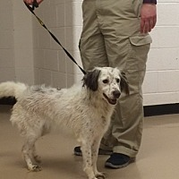 Adopt A Pet :: TN/Snowy - Marietta, GA
