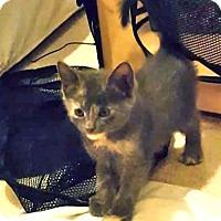 Adopt A Pet :: Ruth - Garland, TX