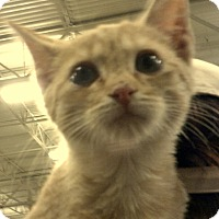 Adopt A Pet :: Frankie - Newnan, GA