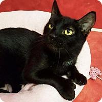Adopt A Pet :: Ralph Malph - Austin, TX