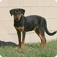Adopt A Pet :: Hiccup - Lufkin, TX