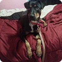 Adopt A Pet :: Lydia - Tucson, AZ