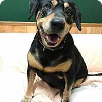 Adopt A Pet :: Brian - Maryville, MO