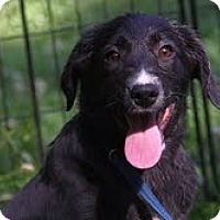 Adopt A Pet :: Ember ($200 adoption fee) - Staunton, VA