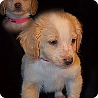 Adopt A Pet :: JOBE - Spring Valley, NY